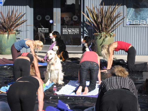 Doga Yoga with Stacy McCarthy