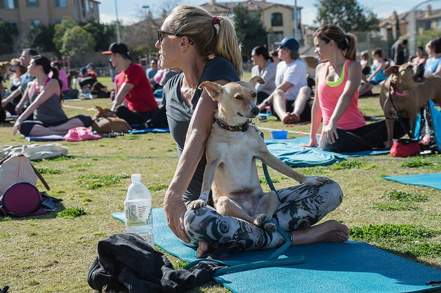 Meditating Dogi with twisting Yogi